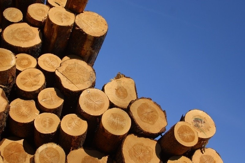 Choosing Timber Species